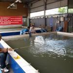 Indoor-Shrimp-Fishing in Taiwan
