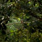 Auf Vogelbeobachtungstour im Guandu Nature Park in Taipei, Taiwan