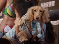 dog-show-participant.jpg