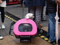 dog-show-visitor.jpg